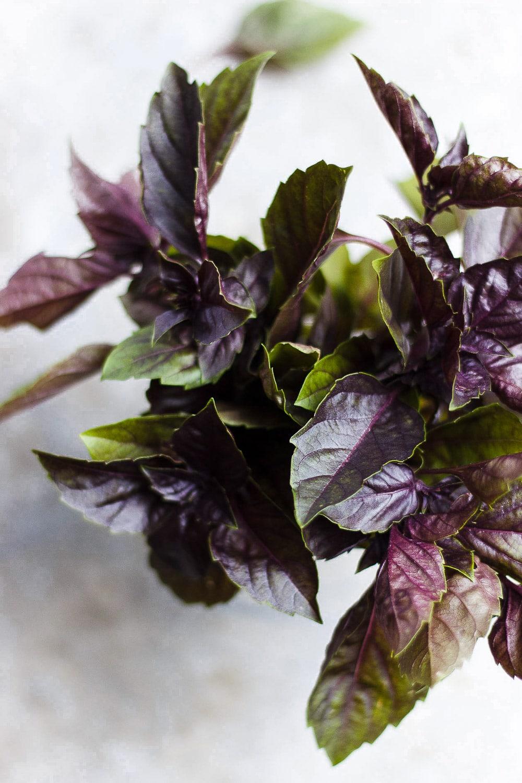 purple basil leaves