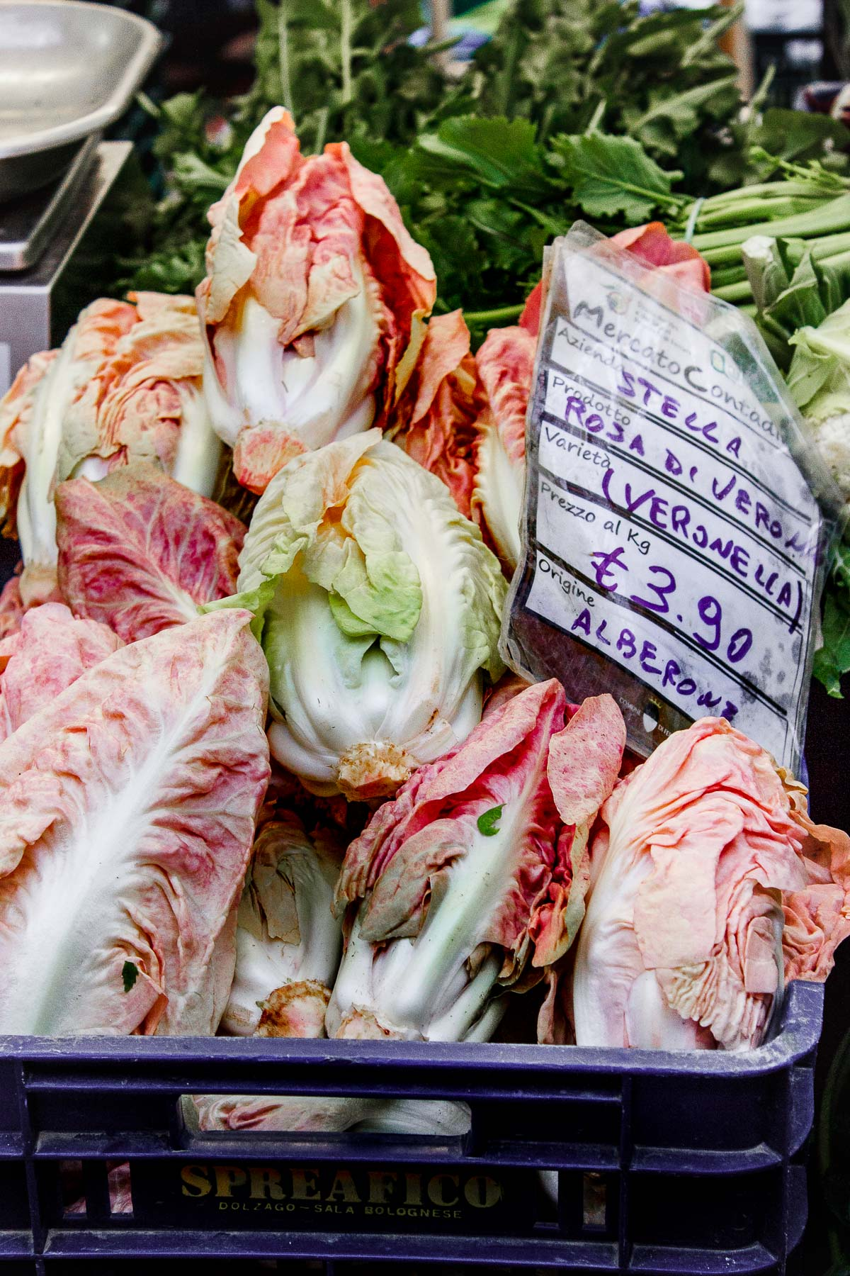 pink radicchio at the market